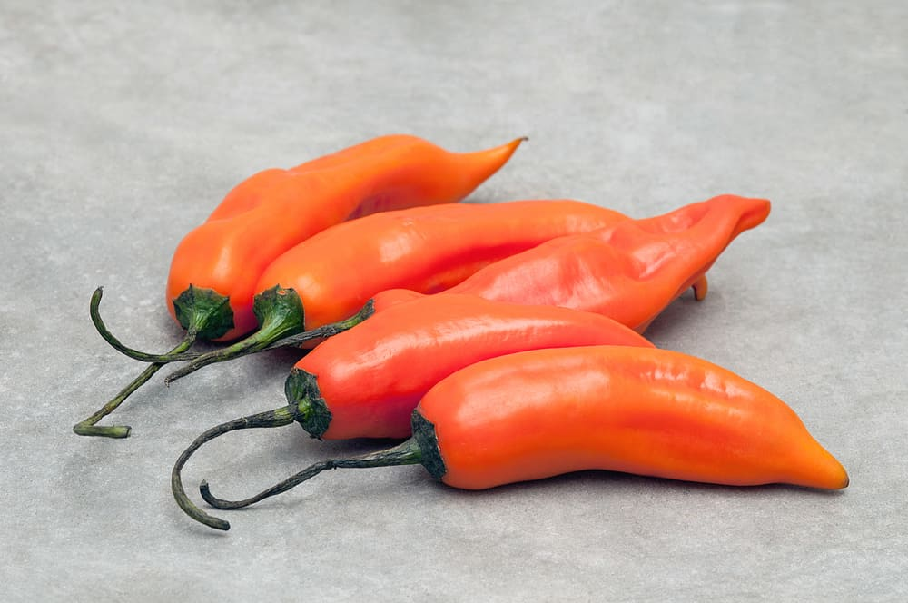 Peruvian Yellow Pepper, Aji Amarillo