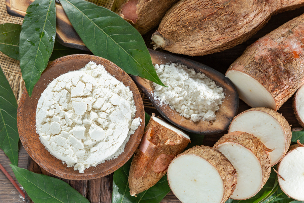 Various forms of yuca or cassava, yuca whole, yuca sliced, yuca powder
