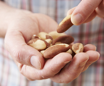 Person eating Brazil nuts from palm of his hand
