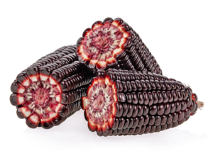 Peruvian Purple corn on white background