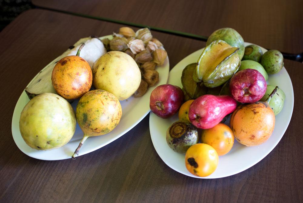 Costa Rican Fresh fruit served for breakfast