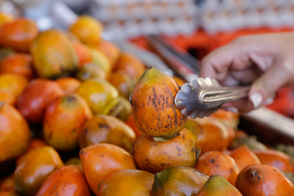 Costa Rican fruit Pejibaye